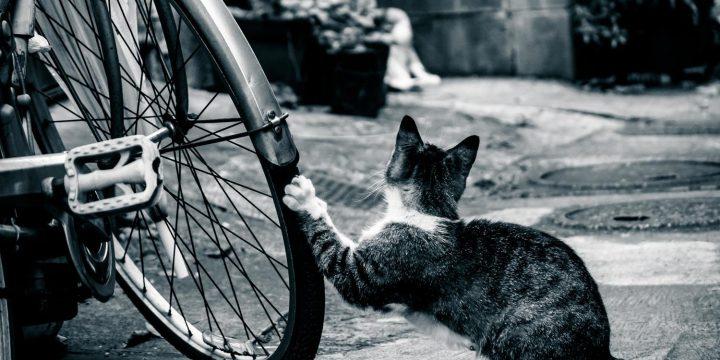 いない間にタイヤをいたずらする猫の画像